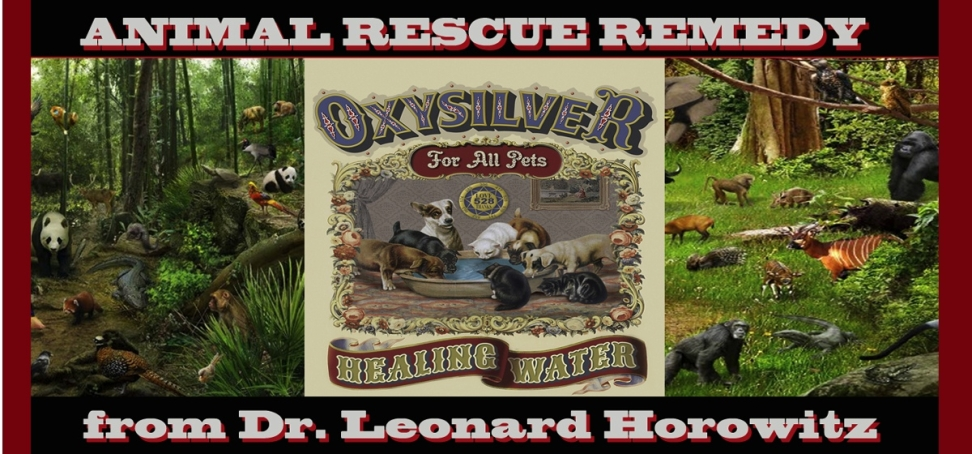 oxysilver_for_pets_banner_dr_horowitz